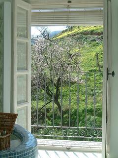 Fruit Blossom views
