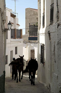 Mules- Itrabo