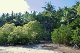 private mangrove enclosed beach