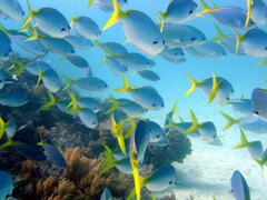 Great Barrier Reef Splendour,