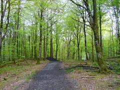 Mullaghmeen forest