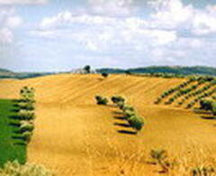 Maremma - Hills