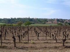 Property Photo: Spring Vines