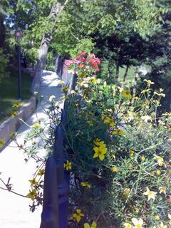 Flowers along Front-Wall Promenade