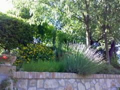 Uppermost Garden in Mid-Spring
