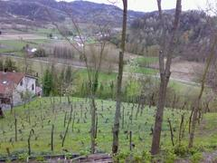 Vineyard & Valley from Front-Wall Promenade