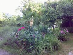 Corner of Front Courtyard Garden