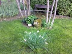 'Dolly' with Daffodils