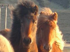 Horse rentals close by