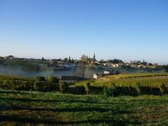 Sainte Croix vineyards