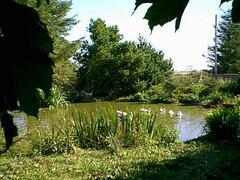 Duck Pond near the cabin