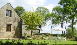 Chestnut large garden
