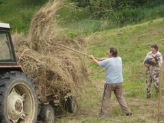 Helping on the farm