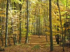 Our woodlands in autumn
