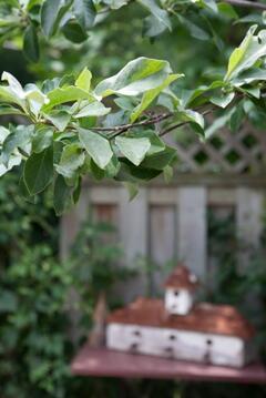 Verandah - Garden