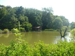 View of the cabin and the lake