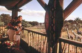Property Photo: Disney Animal Kingdom Lodge view