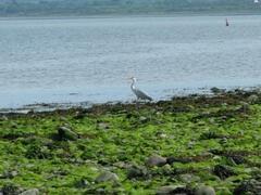 Wildlife around Littor Beach 5 mins walk from Littor Cottage