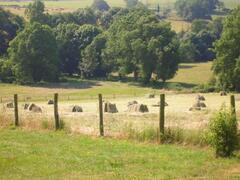 pasturelands