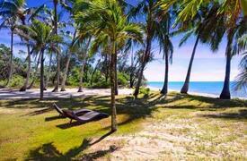 Coconut trees surrounding the area