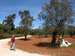 Walking near Casa Bedrock
