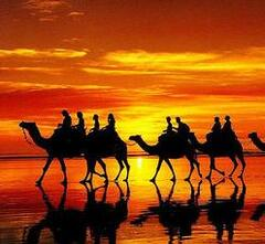 Camel rides in the dunes