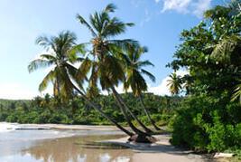 A local beach - a short walk from the villa