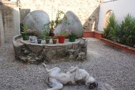 Olive stones