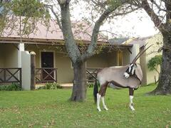 Property Photo: Gembsbok outside the cottage
