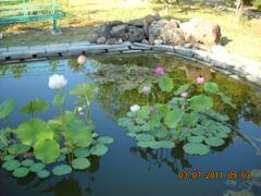 loto flowers