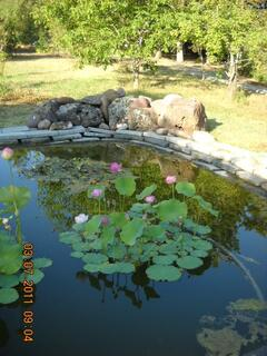 loto flower