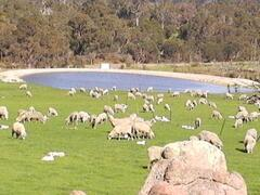 The Front Paddock