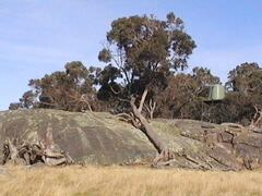 Explore the farm & its granite outcrops