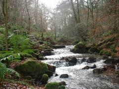 Property Photo: River Heddon