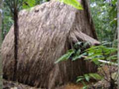 carib jungle cabin