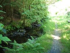 Riverside pathway at Glynrhedyn