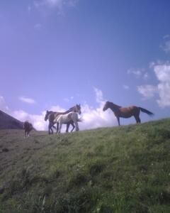 Free horses in the surroundings